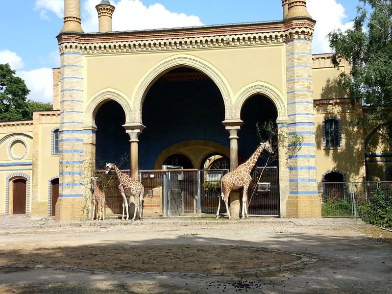 Giraffes in Berlin Zoo