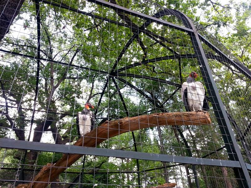 Berlin zoo birds
